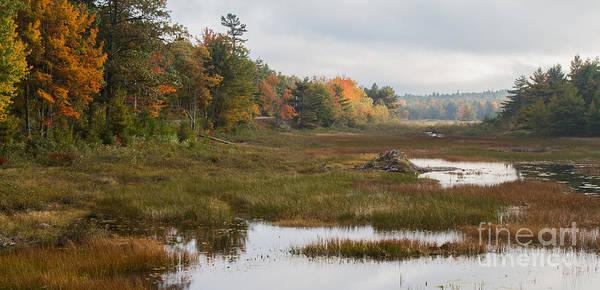 Photograph - Acadia Beaver Pond by Chris Scroggins