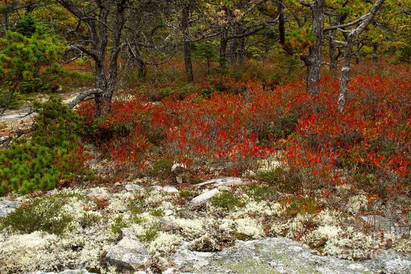 Photograph - Acadia Wonderland by Chris Scroggins