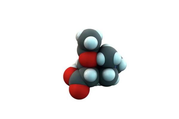Molecular Wall Art - Photograph - Acetylcarnitine Molecule by Ella Maru Studio / Science Photo Library