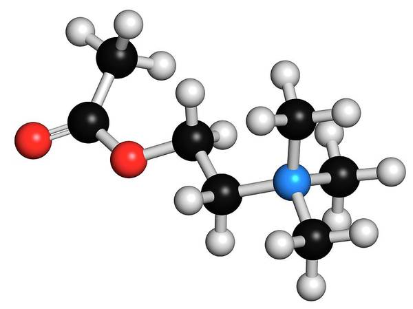 Neurotransmitter Wall Art - Photograph - Acetylcholine Neurotransmitter Molecule by Molekuul