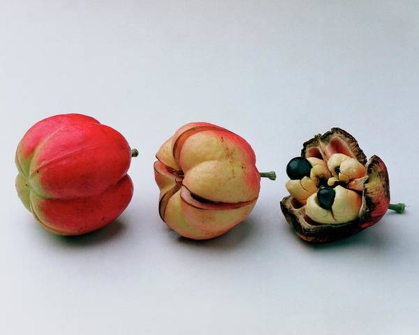 Growth Photograph - Ackee Fruit Development by Romulo Yanes
