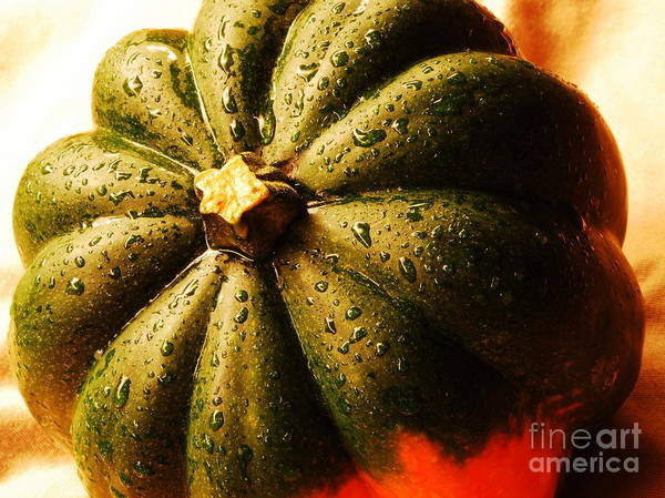 Acorn Squash Photograph - Acorn Squash 1 by Nancy Mueller
