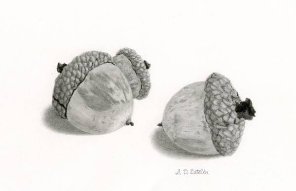 Shadows Drawing - Acorns- Black And White by Sarah Batalka