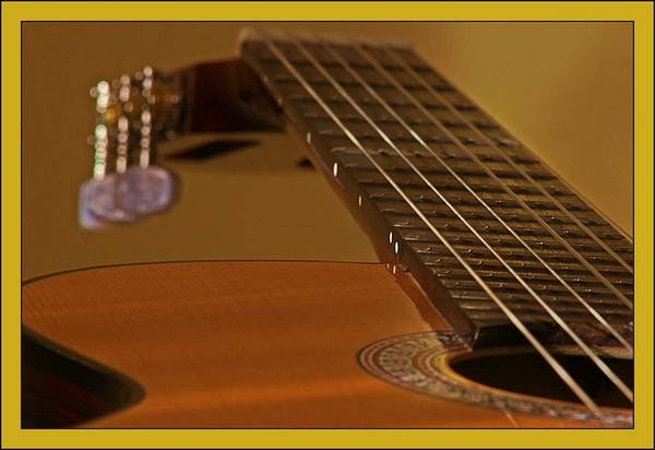 Fret Board Photograph - Acoustic Guitar - 2 by Frank Luxford