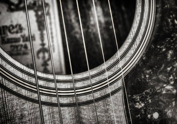Woods Photograph - Acoustically Speaking by Scott Norris