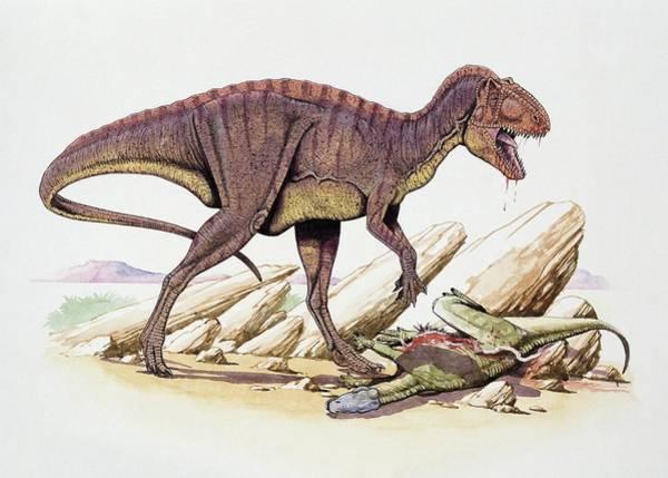 Wall Art - Photograph - Acrocanthosaurus Dinosaur by Deagostini/uig/science Photo Library