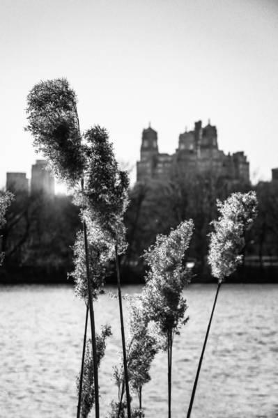 Ornamental Grass Photograph - Across The Reservoir by Jon Woodhams