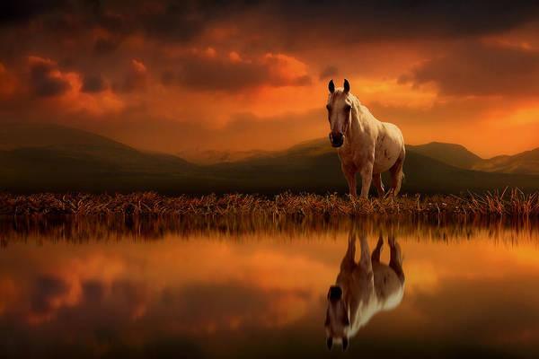 Wildlife Digital Art - Across The Water by Jennifer Woodward