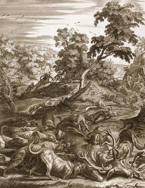 Hound Drawing - Actaeon Turned Into A Stag And Devoured by Bernard Picart