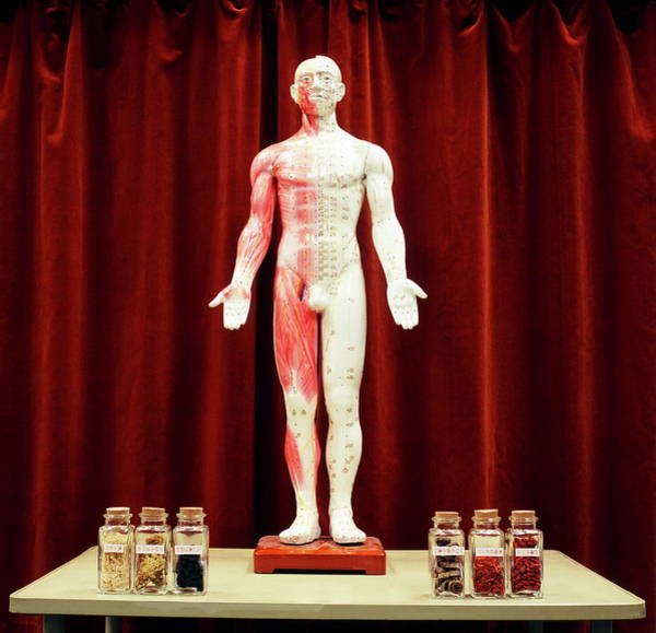 Traditional Chinese Medicine Wall Art - Photograph - Acupuncture Model by Steve Taylor/science Photo Library
