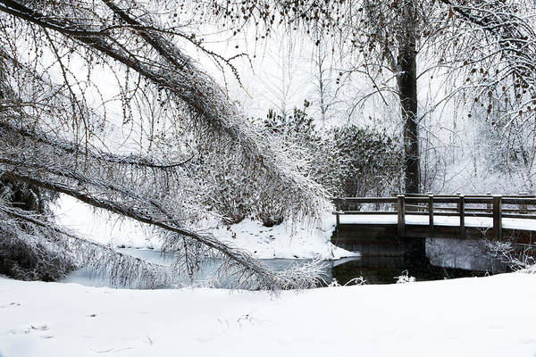 Photograph - Ada Park Ice by Evie Carrier
