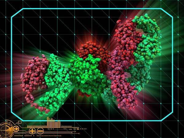 Wall Art - Photograph - Adalimumab Drug Molecule by Laguna Design/science Photo Library