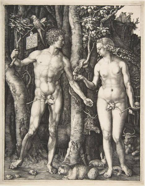 Drawing - Adam And Eve by Albrecht Duerer