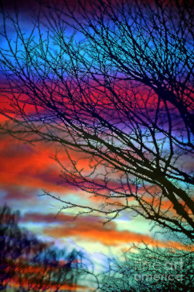 Passionate Photograph - Adding Color To My Sunset Sky by Gwyn Newcombe