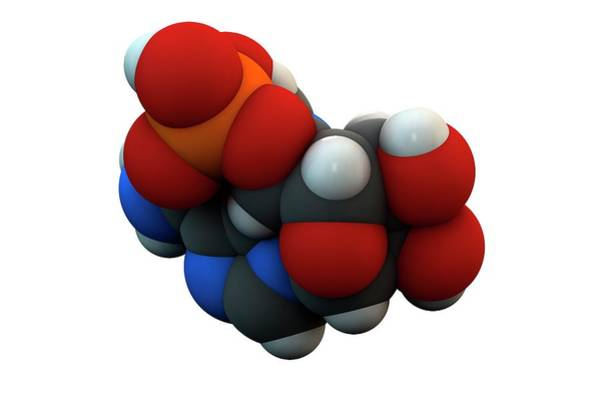 Molecular Wall Art - Photograph - Adenosine Monophosphate Molecule by Ella Maru Studio / Science Photo Library
