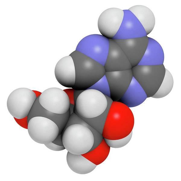 Adenosine Triphosphate Wall Art - Photograph - Adenosine Purine Nucleoside Molecule by Molekuul