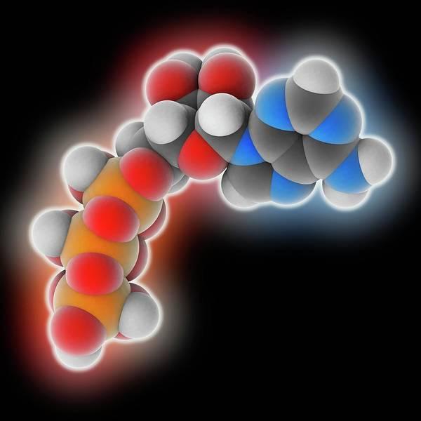 Adenosine Triphosphate Wall Art - Photograph - Adenosine Triphosphate Molecule by Laguna Design