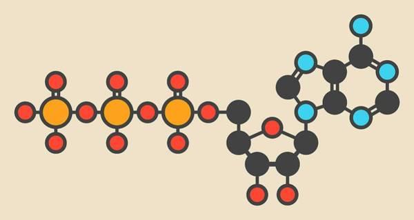 Neurotransmitter Wall Art - Photograph - Adenosine Triphosphate Molecule by Molekuul