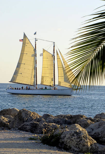 Photograph - Sailing On The Adirondack In Key West by Bob Slitzan