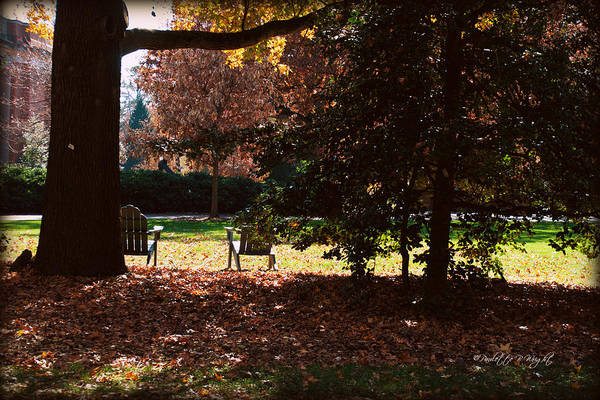 Photograph - Adirondack Chairs-3 - Davidson College by Paulette B Wright