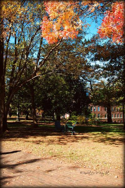 Photograph - Adirondack Chairs 4 - Davidson College by Paulette B Wright