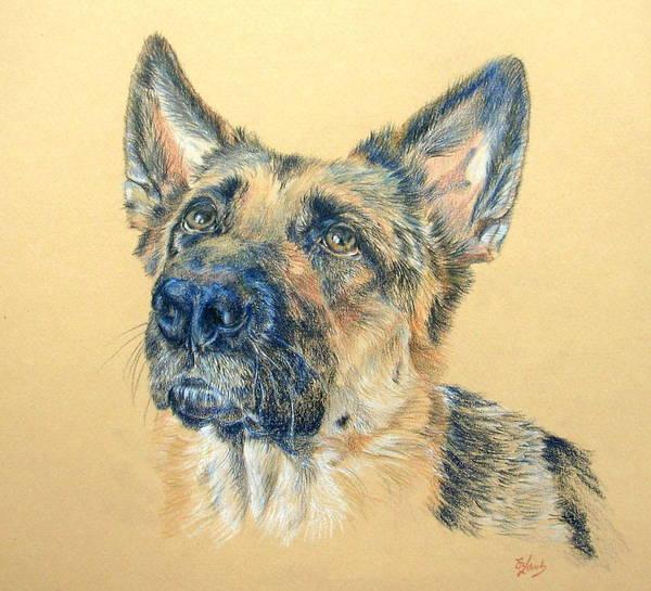 German Shepherd Drawing - Adoring by Liz  Lamb