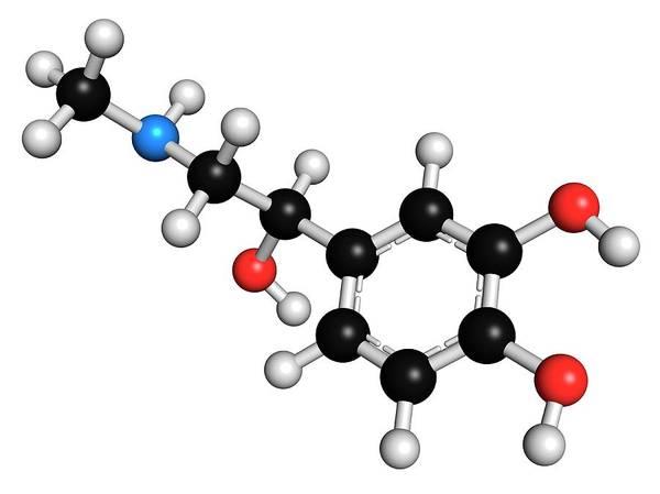 Neurotransmitter Wall Art - Photograph - Adrenaline Neurotransmitter Molecule by Molekuul