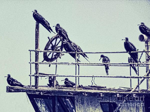 Photograph - Adrift by Julia Springer