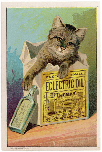 Tabby Drawing - Advertisement For Dr Thomas's  Electric by Mary Evans Picture Library