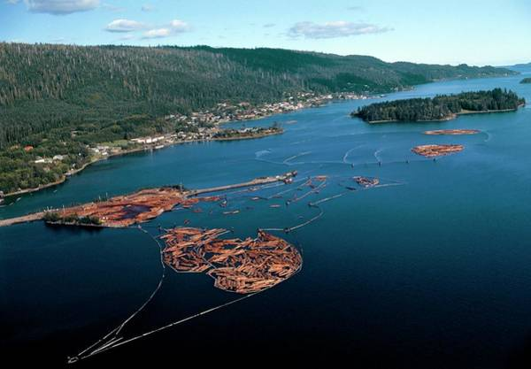 Logs Photograph - Aerial View Of Felled Timber Logs On Water by David Nunuk/science Photo Library