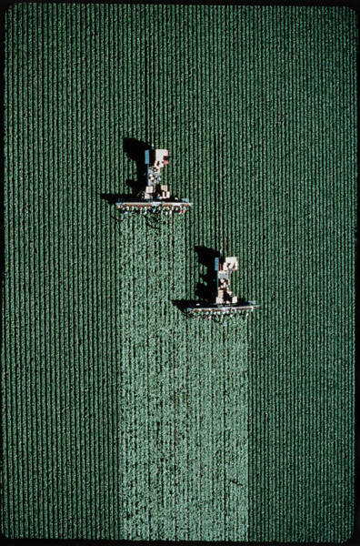 Harvesting Wall Art - Photograph - Aerial View Of Lettuce Being Harvested by Peter Menzel/science Photo Library