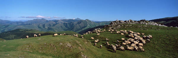 Wall Art - Photograph - Aerial View Of Sheep On Mountain by Panoramic Images