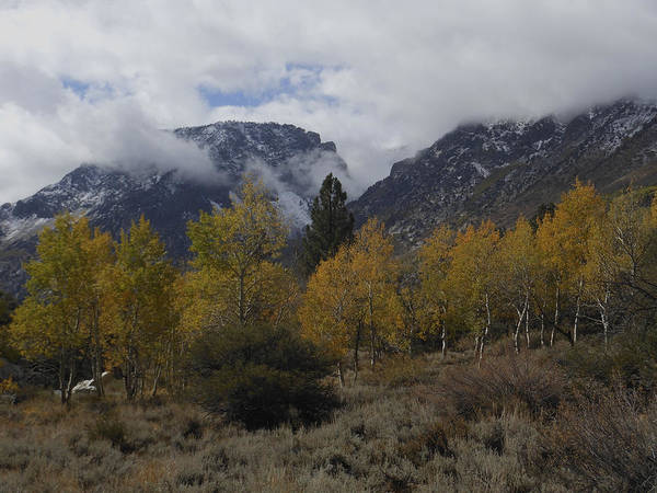 Photograph - Aerie Crag And Aspen Trees by Don Kreuter