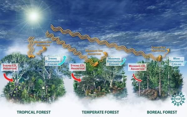 Boreal Forest Photograph - Affects Of Forest Types On Climate by Nicolle Rager Fuller/national Science Foundation/science Photo Library