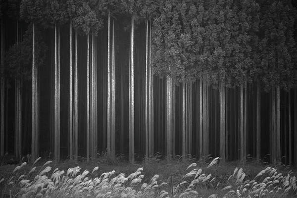 Trunks Photograph - Afforestation by Tsuneya Fujii