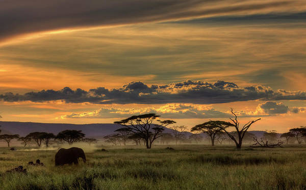 Wall Art - Photograph - Africa by Amnon Eichelberg