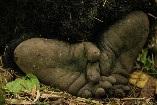 Bamboo Photograph - Africa Rwanda Close-up Of The Feet by Ralph H. Bendjebar