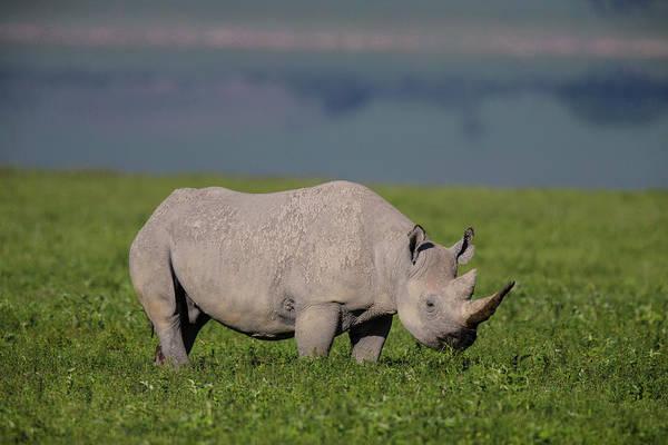 Africa Tanzania Black Rhinoceros Art Print