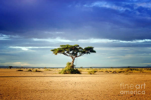 Photograph - African Acacia by Kate McKenna