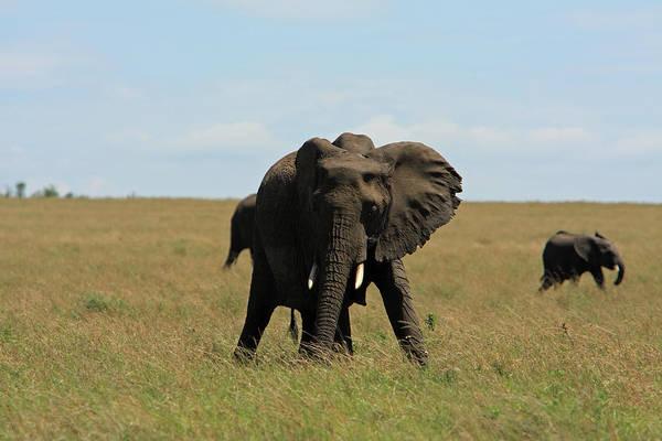 Photograph - African Elephant Masai Mara Kenya by Aidan Moran