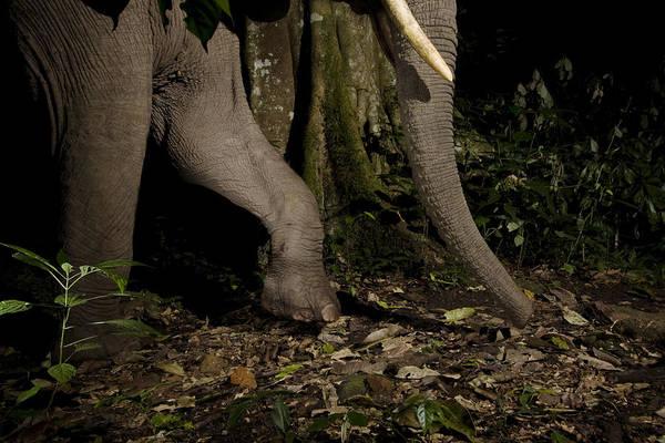 Equatorial Africa Wall Art - Photograph - African Elephant Night Walk Kibale Np by Sebastian Kennerknecht
