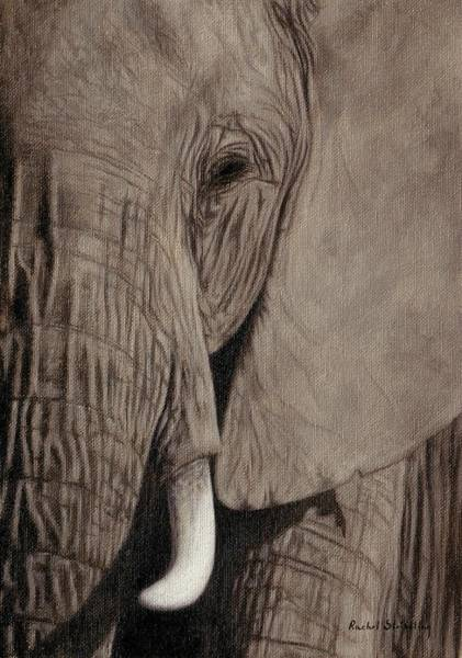 Ivory Painting - African Elephant Painting by Rachel Stribbling
