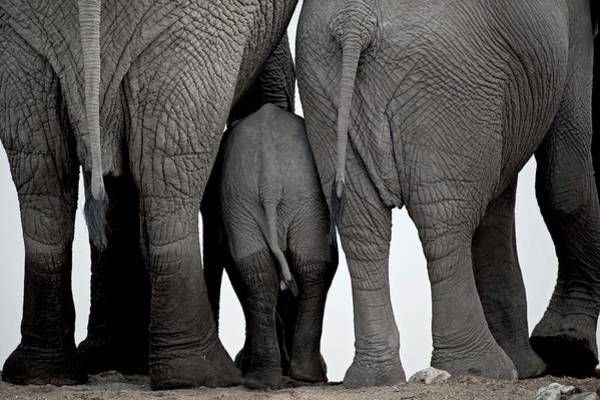 Wall Art - Photograph - African Elephants At A Water-hole. by Tony Camacho