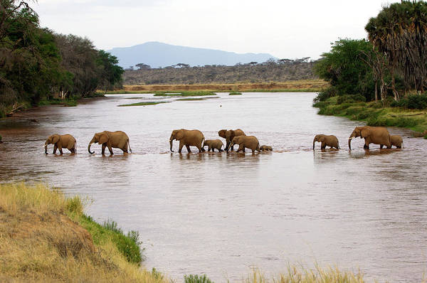 Africana Photograph - African Elephants by Dr P. Marazzi/science Photo Library