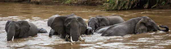 Wall Art - Photograph - African Elephants Having A Bath In Mara by Manoj Shah