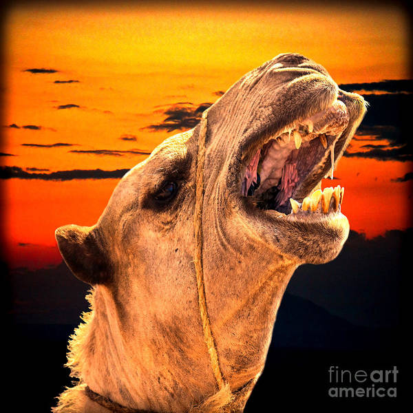 Photograph - African Hump Day by Gary Keesler