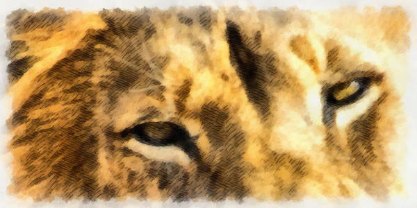 Mixed Media - African Lion Eyes by Angelina Tamez