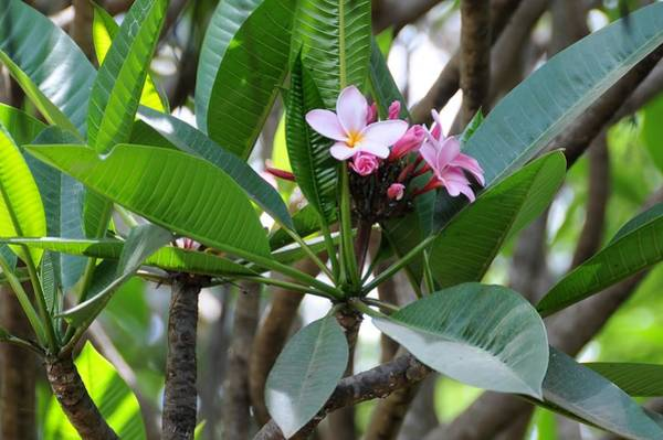 Katherine Green Wall Art - Photograph - African Series Flower In Tree by Katherine Green