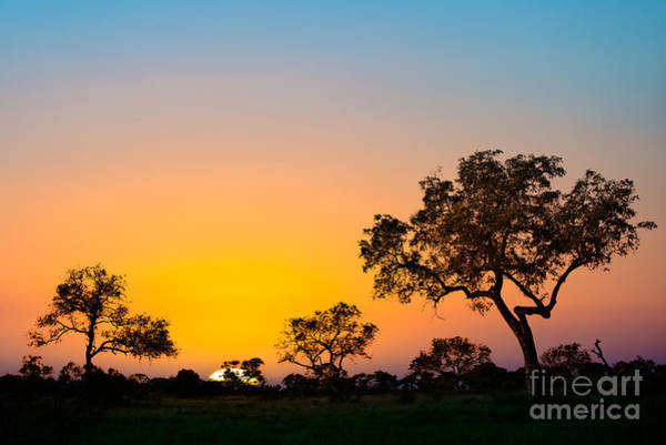 Wall Art - Photograph - African Sunset by Delphimages Photo Creations