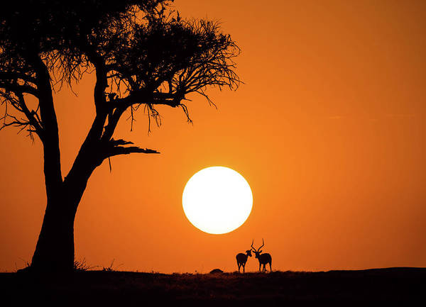 Wall Art - Photograph - African Sunset by Jonathan Zhang